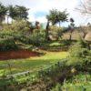 El Pital Lecho de Flores, Chalatenango