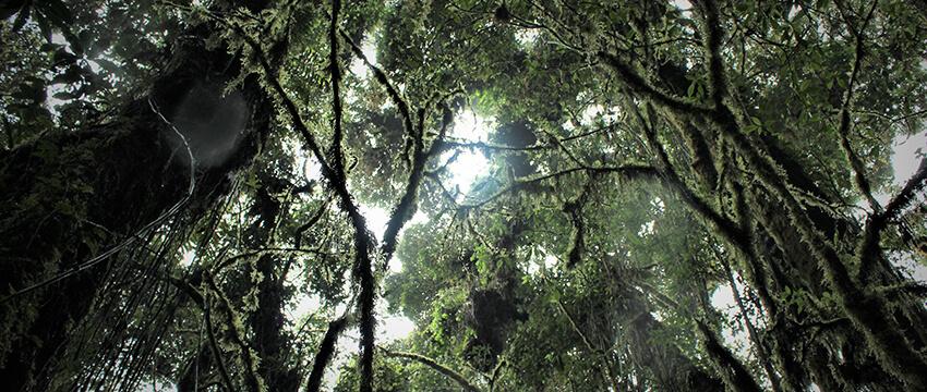 Parque Geoturístico El Limo | Parque Turístico en Metapán, Santa Ana 05